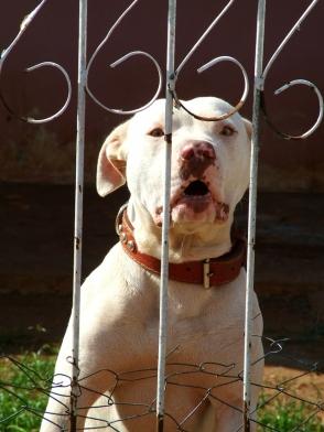dog-attack-1312618-639x852.jpg